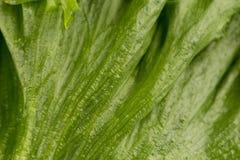 som bakgrund kan nytt grönsallattexturbruk Royaltyfri Bild