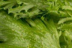 som bakgrund kan nytt grönsallattexturbruk Arkivfoton