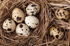 som bakgrundsägg många quail Royaltyfri Foto