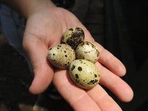 som bakgrundsägg många quail Fotografering för Bildbyråer