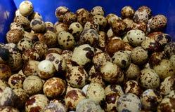 som bakgrundsägg många quail Royaltyfri Fotografi