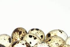 som bakgrundsägg många quail Royaltyfri Bild
