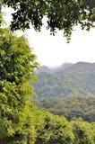 som bakgrundsberg planterar treen Arkivbild