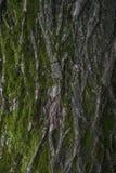 som bakgrundsskället är kan den använda treen Fotografering för Bildbyråer
