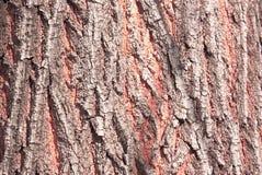 som bakgrundsskället är kan den använda treen Detröda skället Arkivbild