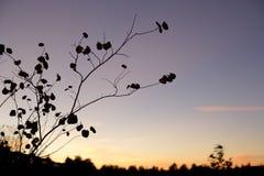 som blå tree för filialskymningsky Royaltyfri Fotografi