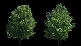 2 som blåser på vindträden som isoleras med alfabetisk
