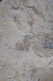 som bruk för textur för bakgrundsrockyttersida Royaltyfria Foton