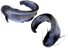 Som de poissons Photographie stock libre de droits