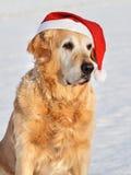 som den guld- klaus för hund retrieveren santa Royaltyfria Bilder