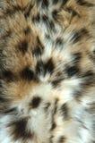 som den wild katten Royaltyfria Bilder