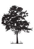 som design inkorporerat bruk för silhouettetexturtree Fotografering för Bildbyråer