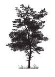 som design inkorporerat bruk för silhouettetexturtree Arkivbild
