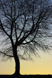 som design inkorporerat bruk för silhouettetexturtree royaltyfri fotografi