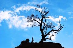 som design inkorporerat bruk för silhouettetexturtree Royaltyfri Foto