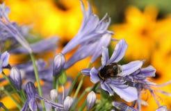som det upptagna biet Arkivbilder