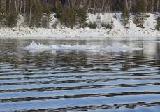 Is som driver i floden arkivfoto