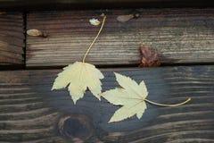 017 som hösten skissar Royaltyfri Foto