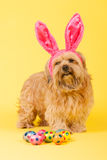 som kaninhunden easter Arkivfoton