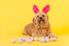 som kaninhunden easter Arkivfoto