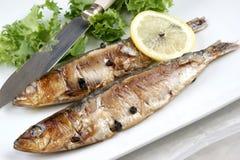 som mat grillade nytt förberedda sardines Royaltyfria Foton