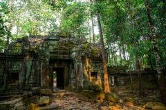 SOM TA Δέντρα με τις ρίζες στους τοίχους anglicanism Καμπότζη Στοκ εικόνες με δικαίωμα ελεύθερης χρήσης