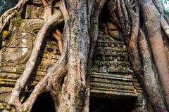 SOM TA Δέντρα με τις ρίζες στους τοίχους anglicanism Καμπότζη Στοκ Φωτογραφία