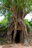 som ta drzewo Obrazy Royalty Free
