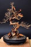 Som undergår mutation bonsai Royaltyfri Foto