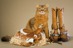 Somali cat with cowboy gear. Somali cat with cowboy boots, spurs, saddle, tie and straw Royalty Free Stock Images