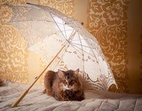 Somali cat portrait. Rudy somali cat portrait under lace umbrella on vintage background royalty free stock photos