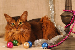 Somali cat ruddy color holiday portrait. Somali cat with Christmas decoration on beige royalty free stock photo