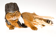 Somali cat wearing pilot outfit. Somali cat wearing pilot cap, scarf and jacket with mini biplane, on white background royalty free stock images
