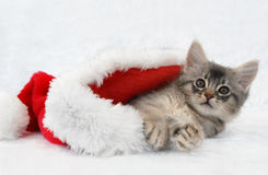 Somali kitten in Santa hat Royalty Free Stock Image