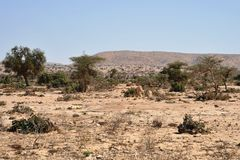 Somali ladscape. The landscape in the area of Las Geel Royalty Free Stock Photo