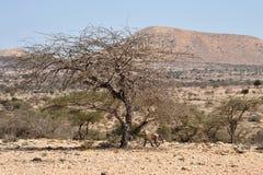 Somali ladscape Royalty Free Stock Photo