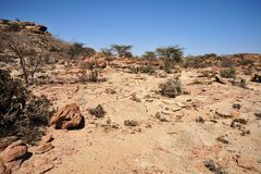 Somali ladscape. LAS GIL, SOMALIA - JANUARY 9, 2010:Complex of caves Las Gil with petroglyphs one of the monuments of ancient culture in Africa, its approximate Stock Photo