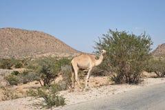 Somali landscape Royalty Free Stock Image
