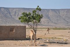 In the Somali village Royalty Free Stock Photography