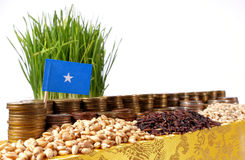 Somalia flag waving with stack of money coins and piles of wheat Royalty Free Stock Photography