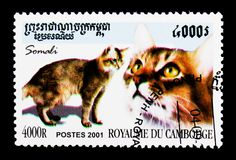 Somalian Cat (Felis silvestris catus), Domestic Cats serie, circ. MOSCOW, RUSSIA - MARCH 18, 2018: A stamp printed in Cambodia shows Somalian Cat (Felis Royalty Free Stock Photo