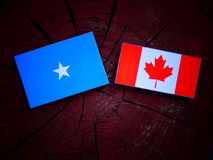Somalian flag with Canadian flag on a tree stump isolated. Somalian flag with Canadian flag on a tree stump Stock Images