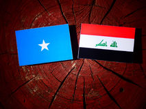 Somalian flag with Iraqi flag on a tree stump isolated. Somalian flag with Iraqi flag on a tree stump Stock Photo