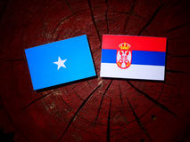 Somalian flag with Serbian flag on a tree stump isolated. Somalian flag with Serbian flag on a tree stump Royalty Free Stock Images