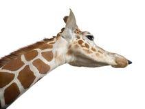Somalische Giraffe Stockfotos