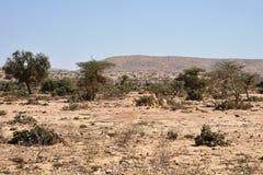 Somalisches ladscape lizenzfreies stockfoto