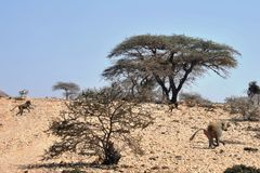 Somalisches ladscape lizenzfreie stockfotos