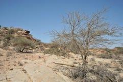 Somalisk ladscape Arkivbild