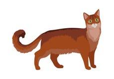 Somaliska Cat Vector Flat Design Illustration Royaltyfri Foto