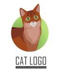Somaliska Cat Vector Flat Design Illustration Arkivbilder